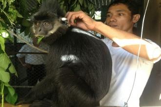Trung tâm Cứu hộ, bảo tồn và Phát triển Sinh vật: Tiếp nhận động vật hoang dã quý hiếm để cứu hộ